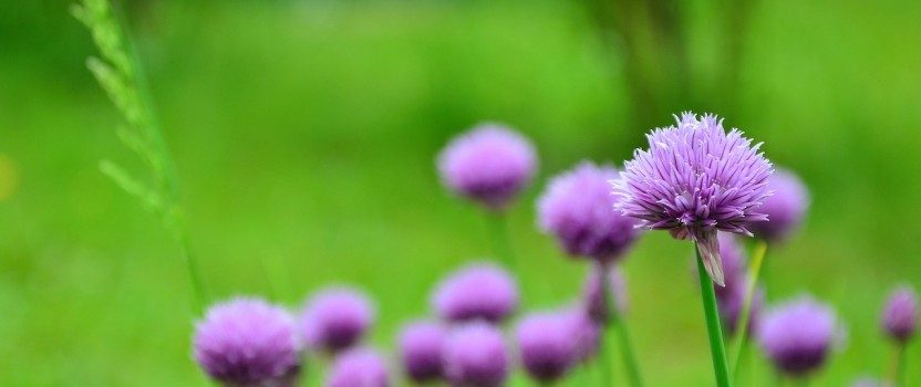 What is Holistic Medicine and How Can It Make a Difference in Your Life?