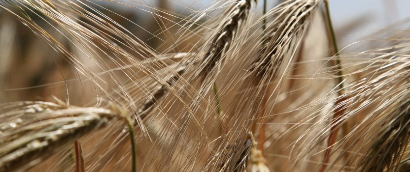 The Gluten-Free Industry